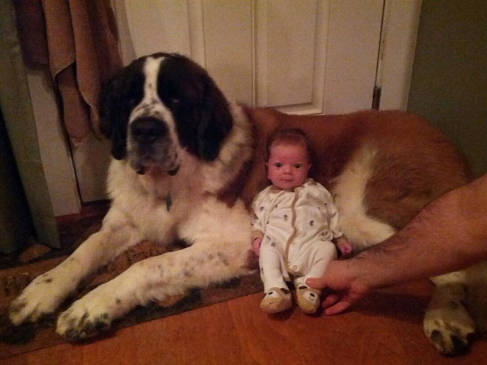 cute-big-dogs-and-babies-10