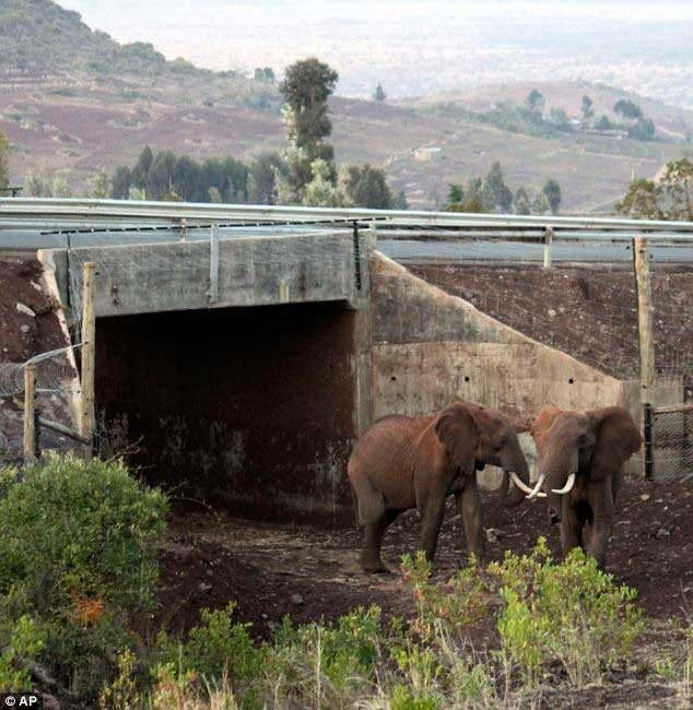 wildlife-crossings-7[3]
