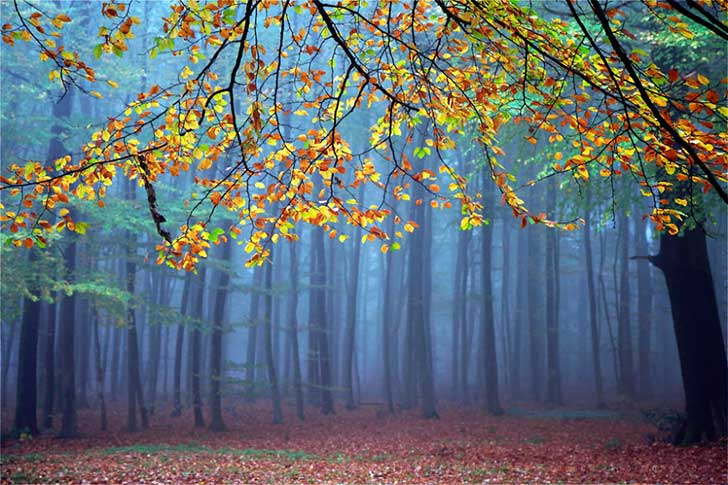 forest_mist1__880