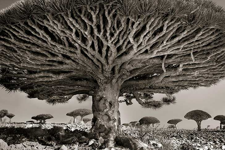 ancient-trees-beth-moon-8