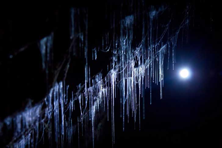 glowworm-cave-close-up