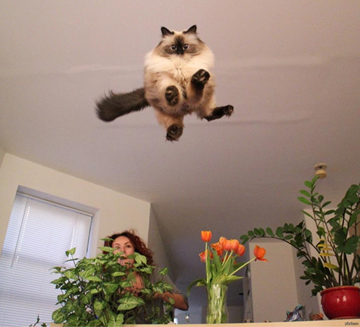 funny-perfectly-timed-cat-photo-55__605