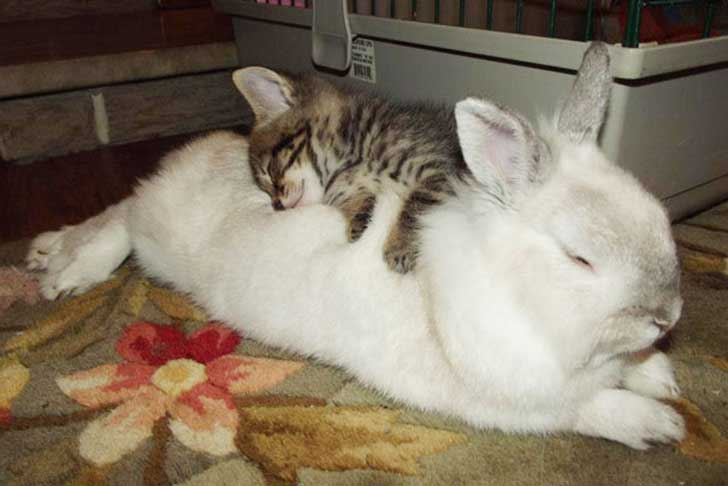 unlikely-sleeping-buddies-animal-friendship-36__605