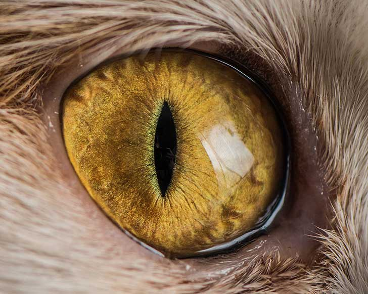 15-Macro-Shots-of-Cat-Eyes2__880