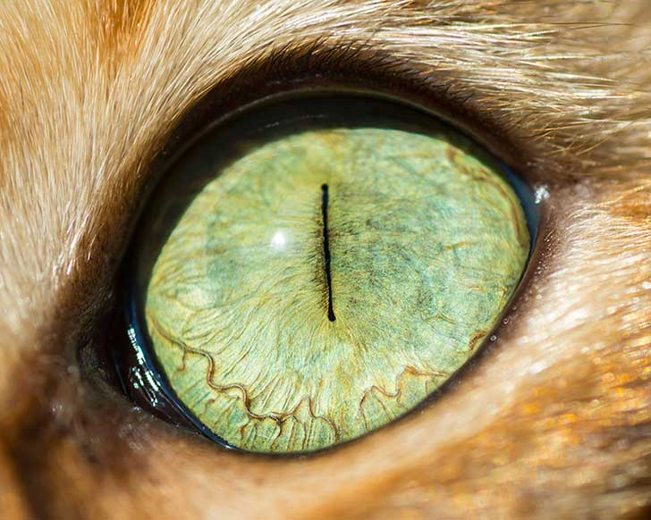 15-Macro-Shots-of-Cat-Eyes3__880