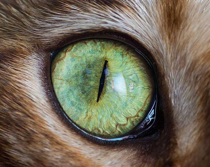 15-Macro-Shots-of-Cat-Eyes6__880