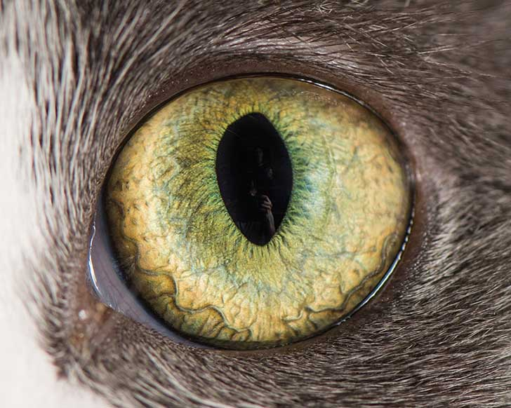 15-Macro-Shots-of-Cat-Eyes8__880