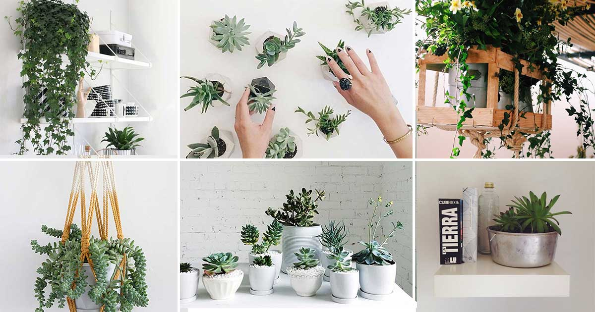 15 espectaculares formas de decorar con plantas para for Matas ornamentales para interiores