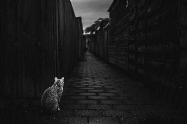 photographing-cats-helps-me-deal-with-my-insecurity-and-dark-past-17__880