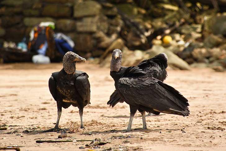 i-stood-next-to-these-amazing-birds-of-prey-and-photographed-them-to-tell-their-story-12__880