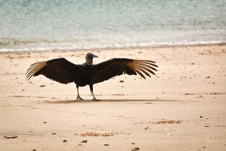 i-stood-next-to-these-amazing-birds-of-prey-and-photographed-them-to-tell-their-story-3__880