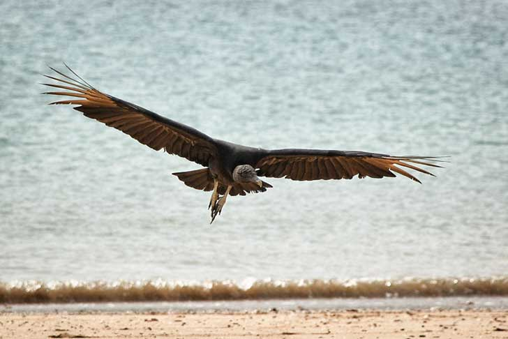 i-stood-next-to-these-amazing-birds-of-prey-and-photographed-them-to-tell-their-story__880