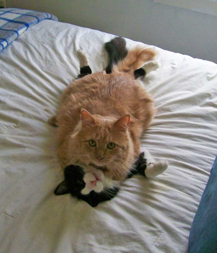 cat-couples-valentines-day-16__605