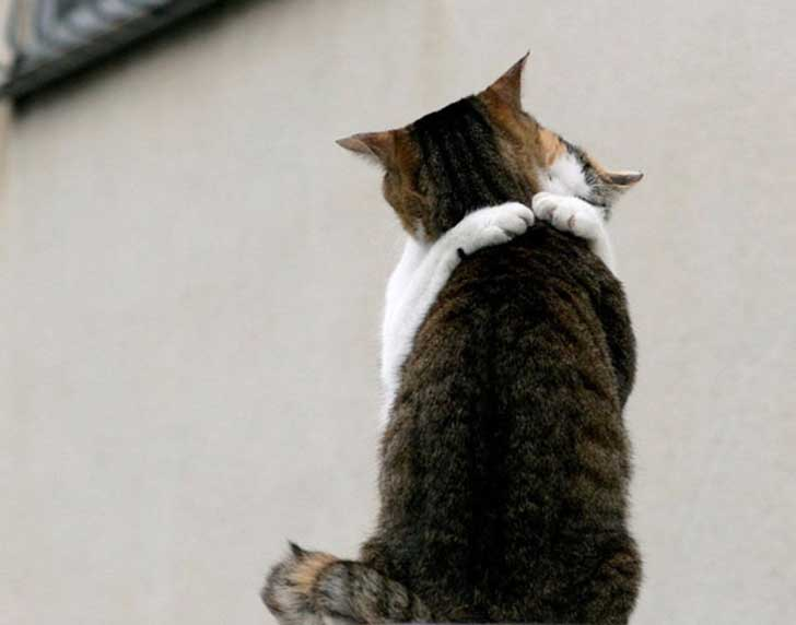 cat-couples-valentines-day-2__605