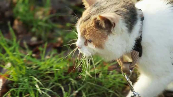meet-stevie-the-blind-rescued-cat-who-loves-to-go-hiking-3__880