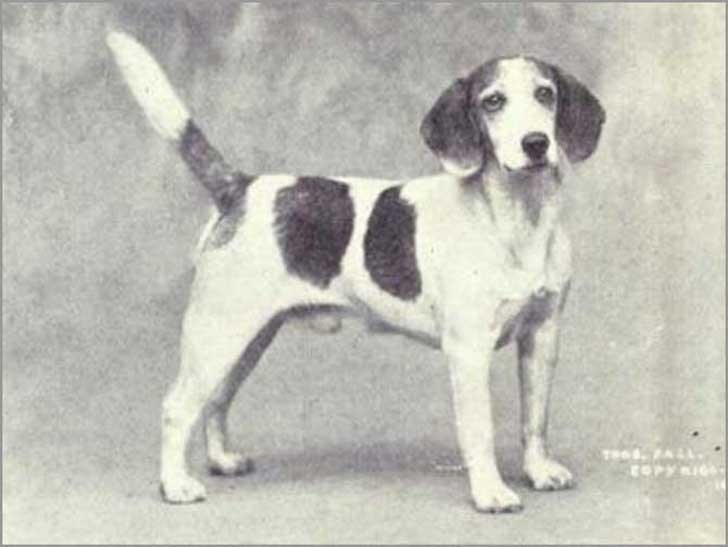 how-some-dog-breeds-have-changed-over-a-century-11-photos-8