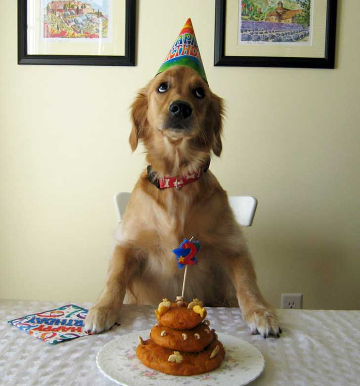 pets-that-have-better-birthday-parties-than-you-54-570e2aacedc5b__700
