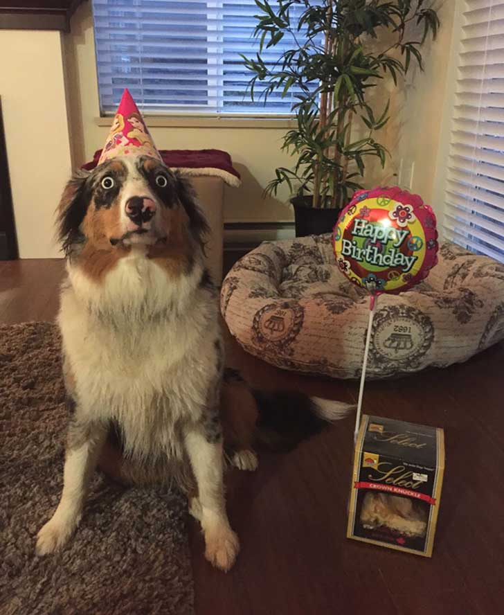 pets-that-have-better-birthday-parties-than-you-67-570f3860dd084__700