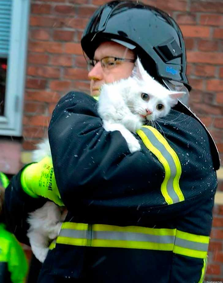 firefighters-rescuing-animals-saving-pets-42-5729ee1bb4a84__605