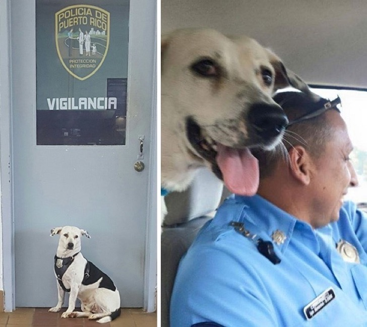 stray-dog-adopted-police-gorgi-bayamon-puerto-rico-13
