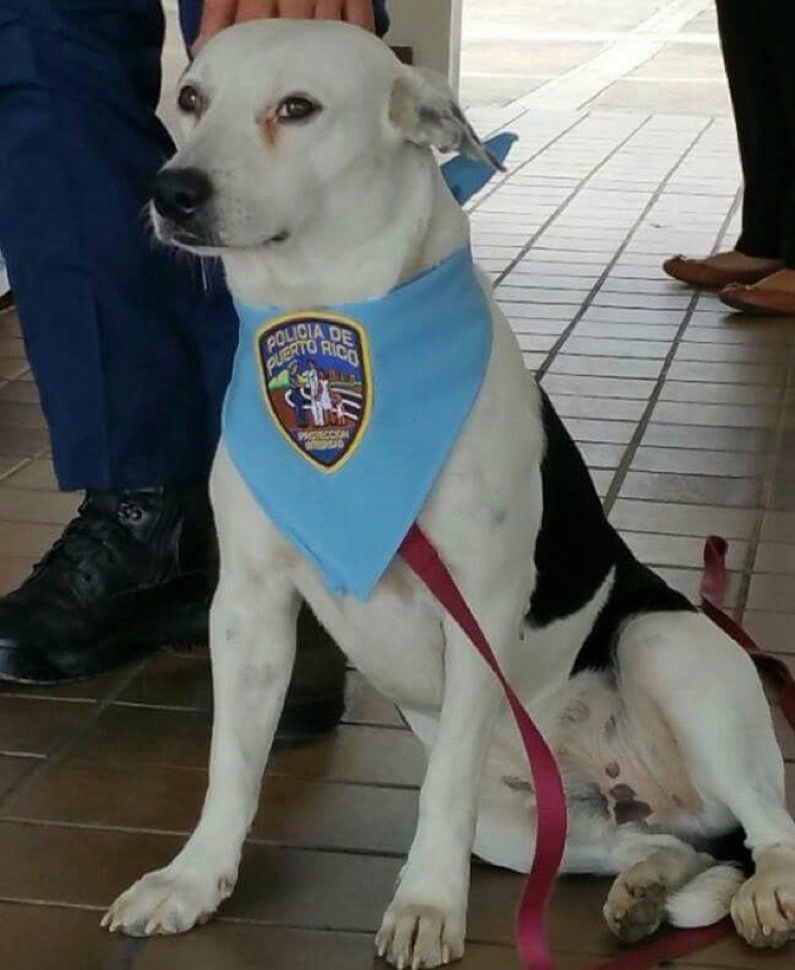 stray-dog-adopted-police-gorgi-bayamon-puerto-rico-6