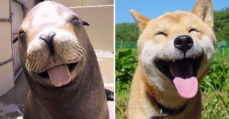 funny-seals-look-like-dogs-23-574d8207639f2__880 2