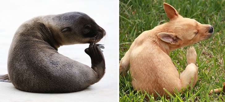 funny-seals-look-like-dogs-43-574ed0a4c820f__880 2
