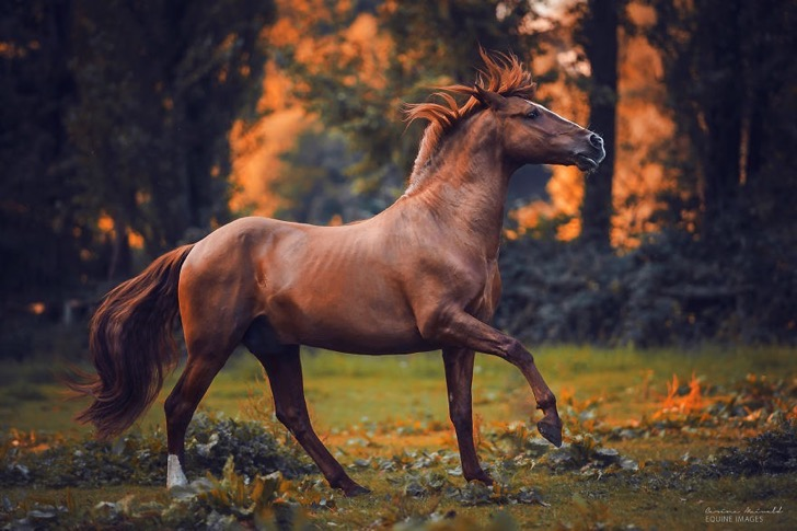 I-found-freedom-with-horses-576d2d5456b6c__880