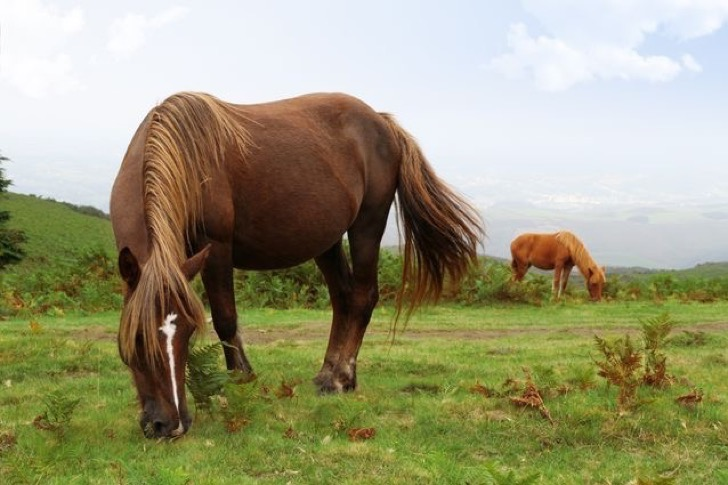 feral-pottok-ponies.jpg.638x0_q80_crop-smart