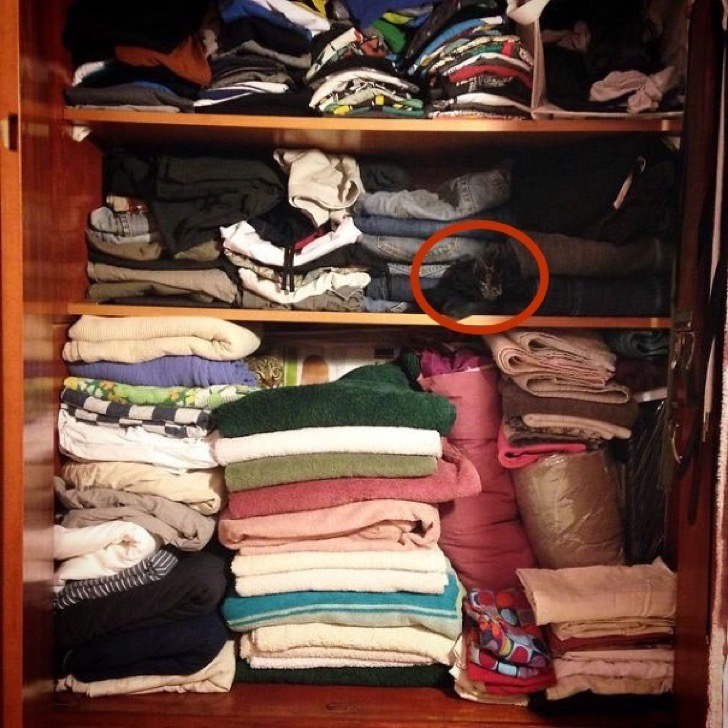 find-hidden-cat-camouflage-hide-and-seek-catouflage-158-copia