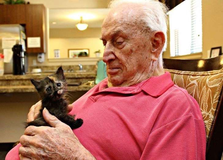 retirement-home-shelter-cats-3-2