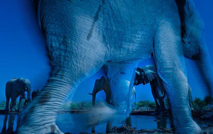 essence-of-elephants--greg-du-toit-of-south-africa-won-the-wildlife-photographer-of-the-year-award-for-this-shot-of-african-elephants-taken-at-a-waterhole-in-botswanas-northern-tuli-game-reserve
