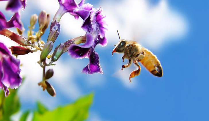 bee-on-flower-desktop-wallpapers