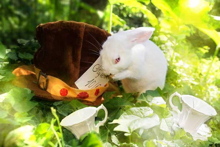 From-labs-to-Wonderland-dozens-of-rescued-animals-became-magic-models-in-Alice-style1__880