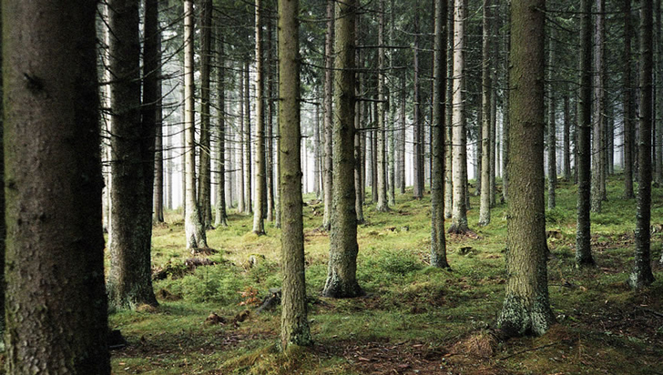 Sometimes-I'm-in-the-woods…