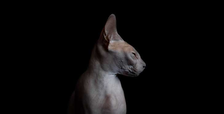 sphynx-cat-photos-by-alicia-rius-21__880