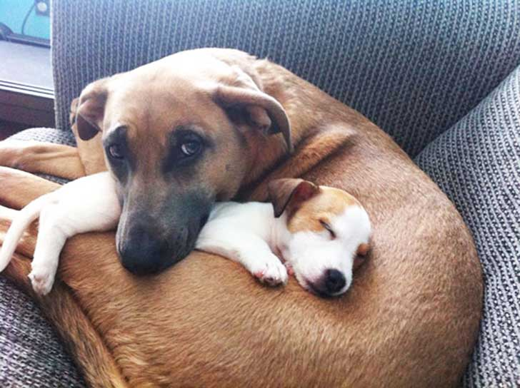 dog-best-friends-28__605