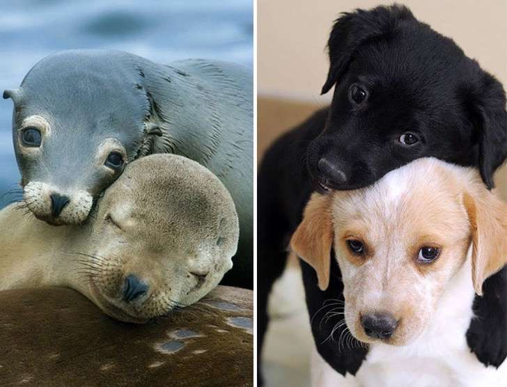 funny-seals-look-like-dogs-26-574da00bb91a5__880 2